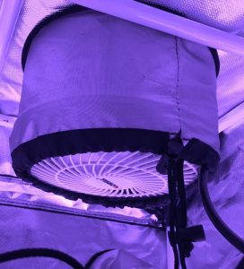 Air Circulation In Your Grow Tent