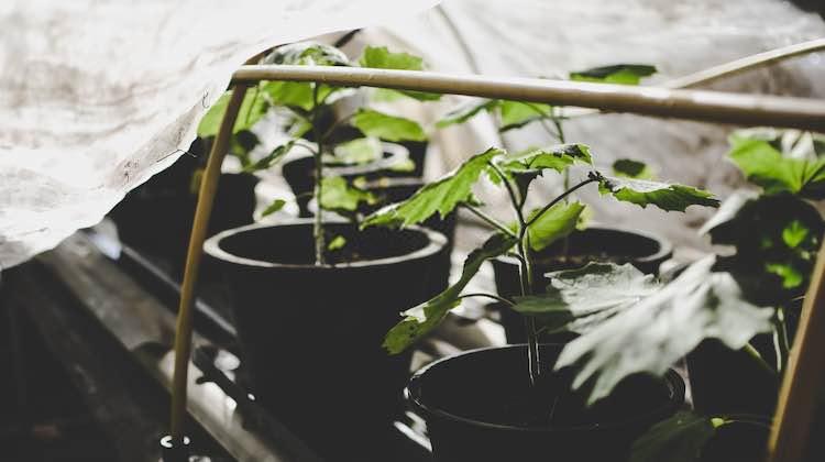 Best 2×2 Grow Tent