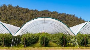 Grow Tent Air Requirement