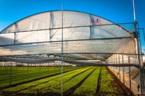 Give your Grow Room a Perfect Structure