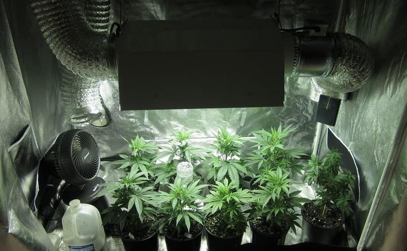 Grow Tent Into Same Room