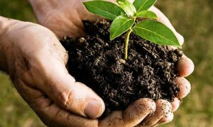 Use Soils That Can Drain Water Easily