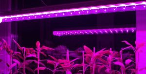 Choose Light Intensity Needed By Your Plant