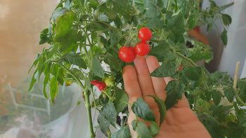 Fix Cold Temperatures in A Grow Room