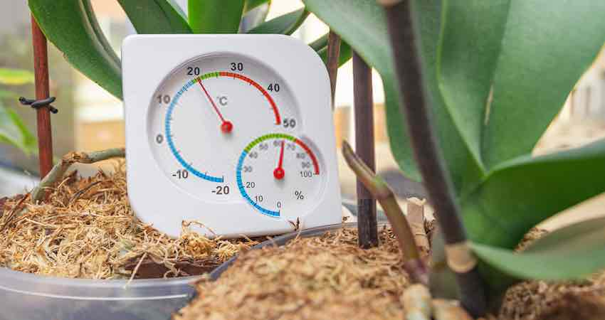 Best Hygrometers For Grow Room
