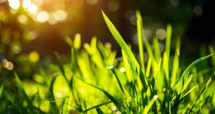 best weed and feed for st augustine grass