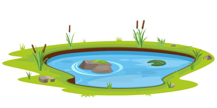 Things to know when converting a fish pond to the garden
