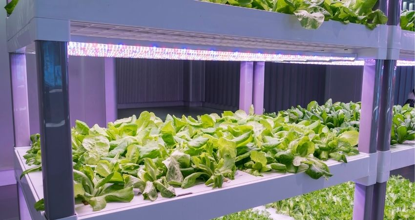 growing vegetables indoors with grow lights