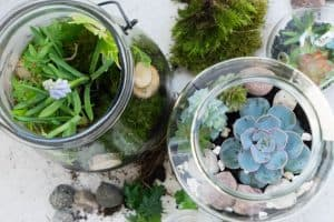 Considerations when growing plants in mason jars