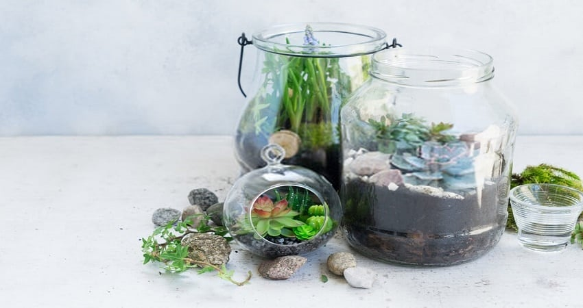 succulents mason jars glass