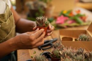 Frequent checkups on your succulent plants
