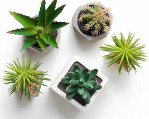Select the best succulent plants that meet your preferences