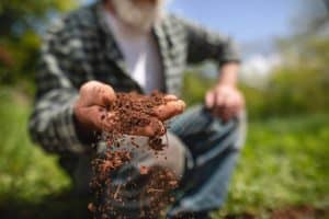 How to Eliminate Mold from the plant soil