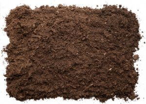 How to fix the problem of Mold in plant soil