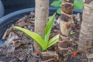 Proper soil moisture